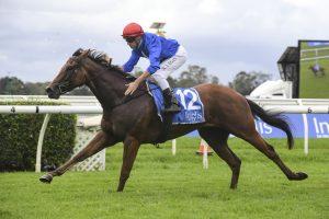 Rubisaki Horse Form (Photo: Steve Hart)   Races.com.au