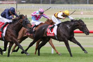 Pretty Brazen Horse Form (Photo: Ultimate Racing Photo) | Races.com.au