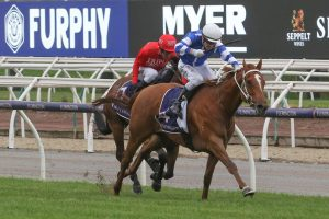 Gytrash Horse Form (Photo: Ultimate Racing Photos) - Races.com.au