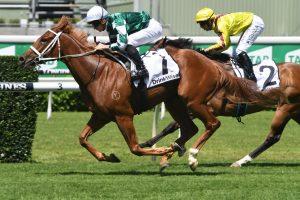 Hungry Heart Horse Form (Photo: Steve Hart)   Races.com.au