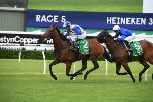 The Bostonian Horse Form (Photo: Steve Hart)   Races.com.au