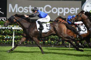 Shadow Hero (Photo: Steve Hart) - Races.com.au