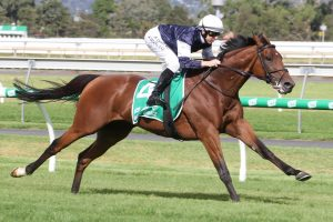King Of Leogrance Horse Form (Photo: Jenny Barnes) | Races.com.au
