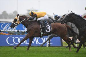 Star Of The Seas Horse Form (Photo: Steve Hart) | Races.com.au