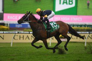 Master Of Wine Horse Form (Photo: Steve Hart)   Races.com.au