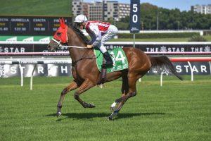 Toffee Tongue Horse Form (Photo: Steve Hart)   Races.com.au