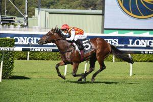 Peltzer Horse Form (Photo: Steve Hart) | Races.com.au