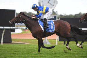 Dawn Passage (photo: Steve Hart). Races.com.au