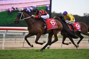 Wu Gok (Photo: Steve Hart) - Races.com.au