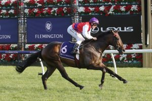 King Of Hastings (Photo: Ultimate Racing Photos) - Races.com.au