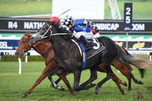 Attention Run Horse Form (Photo: Steve Hart)   Races.com.au