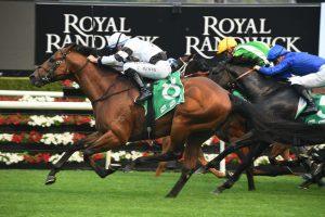 Signore Fox (Photo: Steve Hart) - Races.com.au