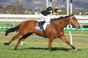 Behemoth Horse Form (Photo: Jenny Barnes) | Races.com.au