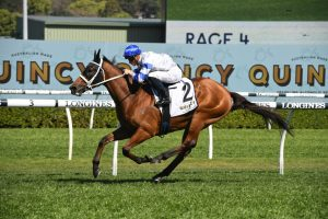 Kolding Horse Form (Photo: Steve Hart)   Races.com.au