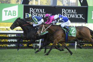 Mirage Dancer Horse Form (Photo: Steve Hart) | Races.com.au
