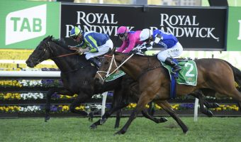 Grafton Cup 2021 Field & Betting: Punters After Purrfect Deal