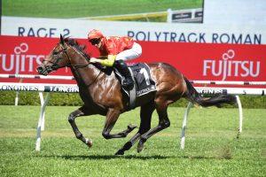 Wild Ruler Horse Form (Photo: Steve Hart) | Races.com.au