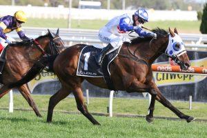 Mr Quickie Horse Form (Photo: Ultimate Racing Photos) | Races.com.au