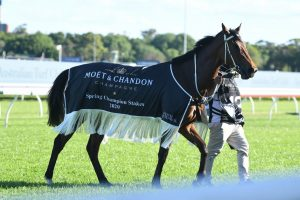 Montefilia Horse Form (Photo: Steve Hart) | Races.com.au