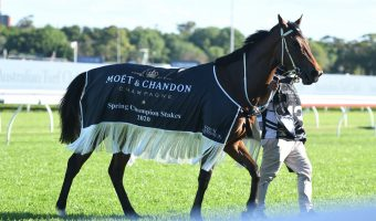 Montefilia Takes on Boys in 2021 Australian Derby Field & Betting