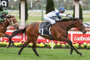 Miami Bound Horse Form (Photo: Ultimate Racing Photos) | Races.com.au