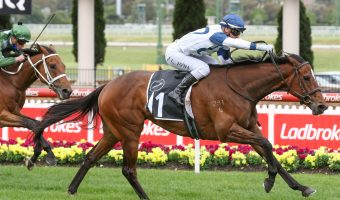 2021 Melbourne Cup Hopes Head Andrew Ramsden Stakes Field