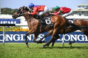 Queen Of The Turf Stakes An Option For Invincible Gem After Emancipation Stakes