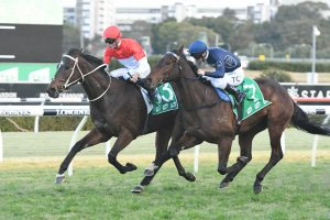 Bergerac Backs Up and Wins Ipswich Cup 2019