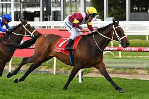 Tattersall's Cup Winner Brimham Rocks In Another Waller Domination
