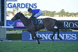 2019 Gloaming Stakes Results: Shadow Hero New VRC Derby Favourite