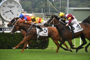 Quackerjack Wins Villiers Stakes 2019 and Doncaster Mile Exemption