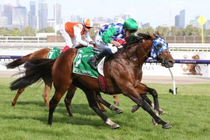 2021 Australian Cup Betting Update: Fifty Stars Favourite for Title Defence