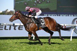 Rothfire odds on in 2020 Golden Rose betting